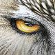 Ef8NMKRnKs's avatar