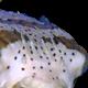 usedel's avatar